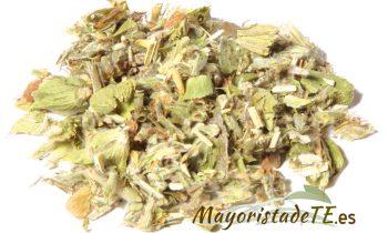 Té griego de hierbas, Sideritis Syriaca
