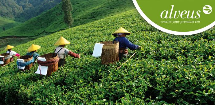 Mayorista de tés